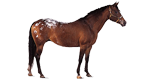 horse_category