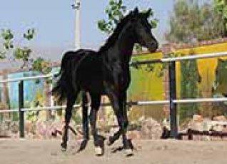 setno.horse